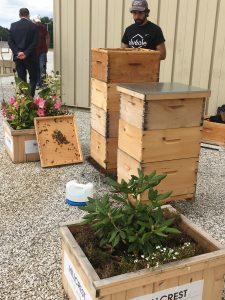 Hives of honey