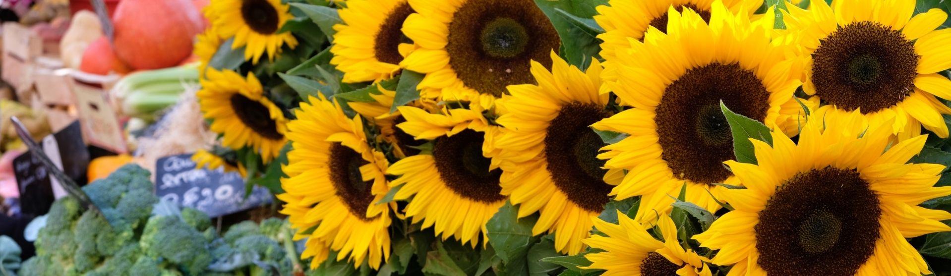 Sunflowers in Farmers market